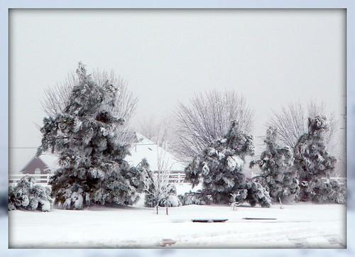 SnowyPines2010