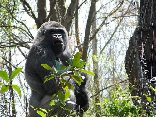 Gorilla9_ECU