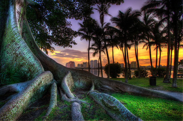 MDSimages | Banyan Tree
