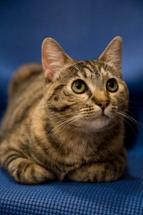 January 6, 2009 - Rahm the cat