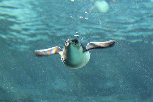 Cheeky Penguin