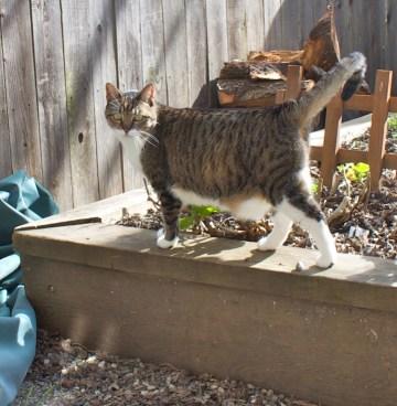 Kitty No. 34 returns