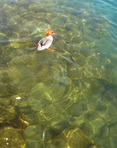 duck splits