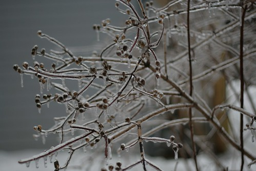 Ice storm :: branches