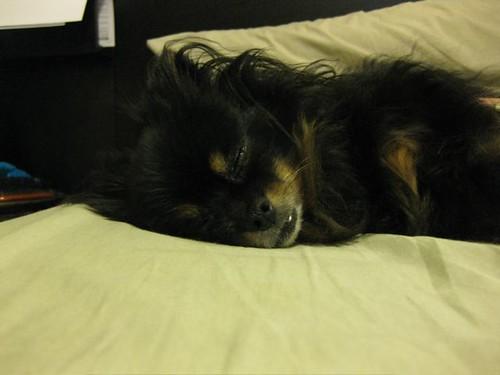 Happy Sleepy Doggy