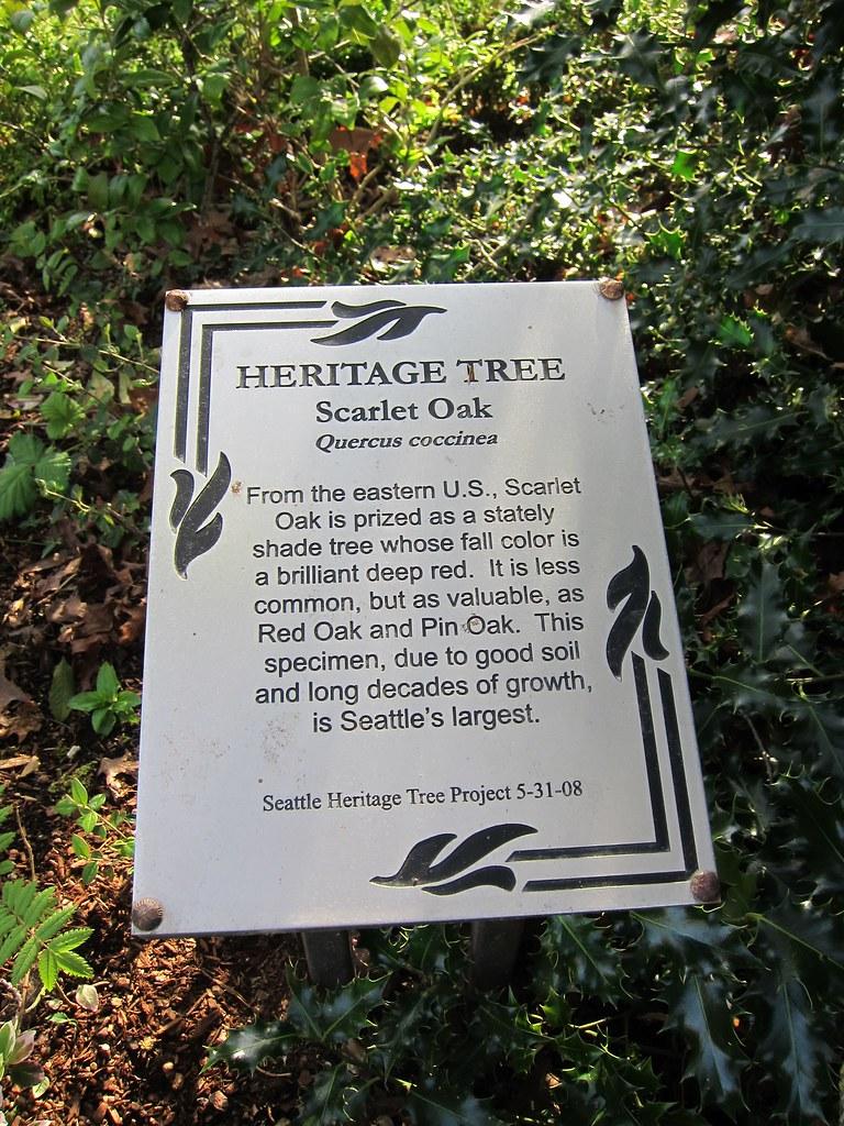 Scarlet Oak Heritage Tree Sign