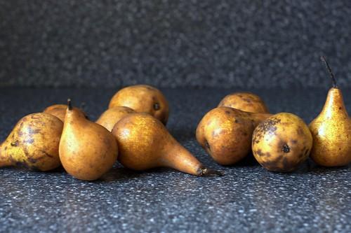 downtrodden bosc pears