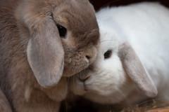 Bunny Snuggles