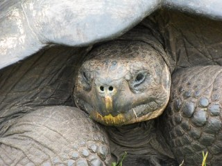 Giant Turtle 1