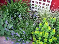 Daylily, Nepeta, etc. along back fence