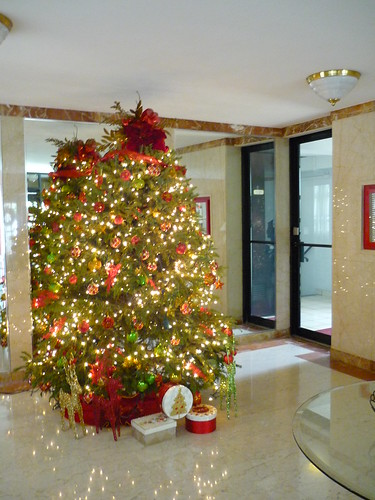 A real Xmas tree in Puerto Rico