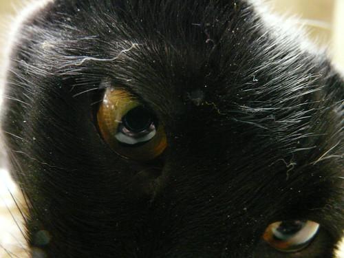 eddeh's eye [original]