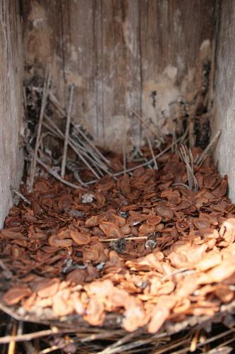 Milkweed seeds in nestbox