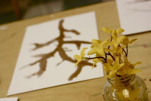 yellow forsythia - 4