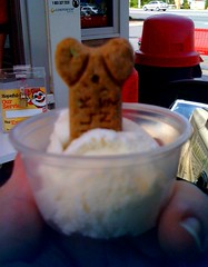 Doggie sundae from Bruster's