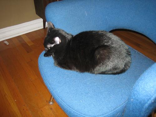 Pants' Blue Chair
