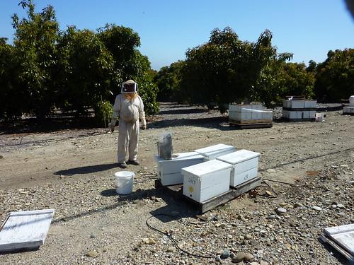 Santa Paula Beekeepers