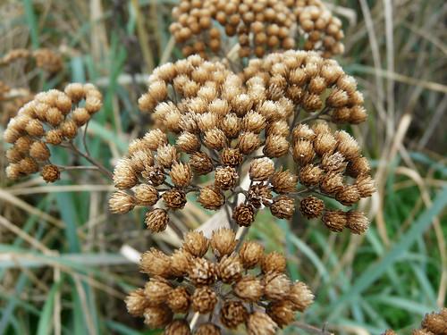 fall seed heads