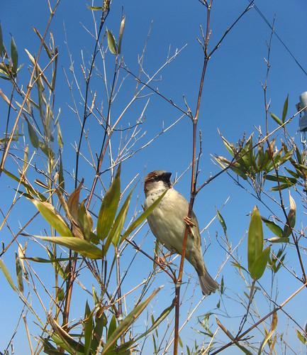 bird spying on brunch