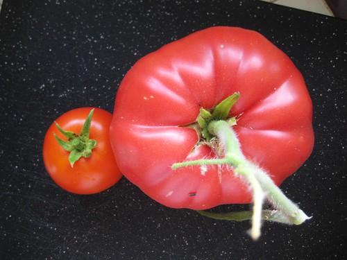 ginormous tomato