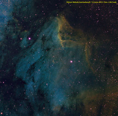 Pelican Nebula (Narrowband)