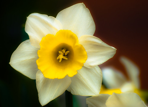 Unclear Daffy (by orb9220)