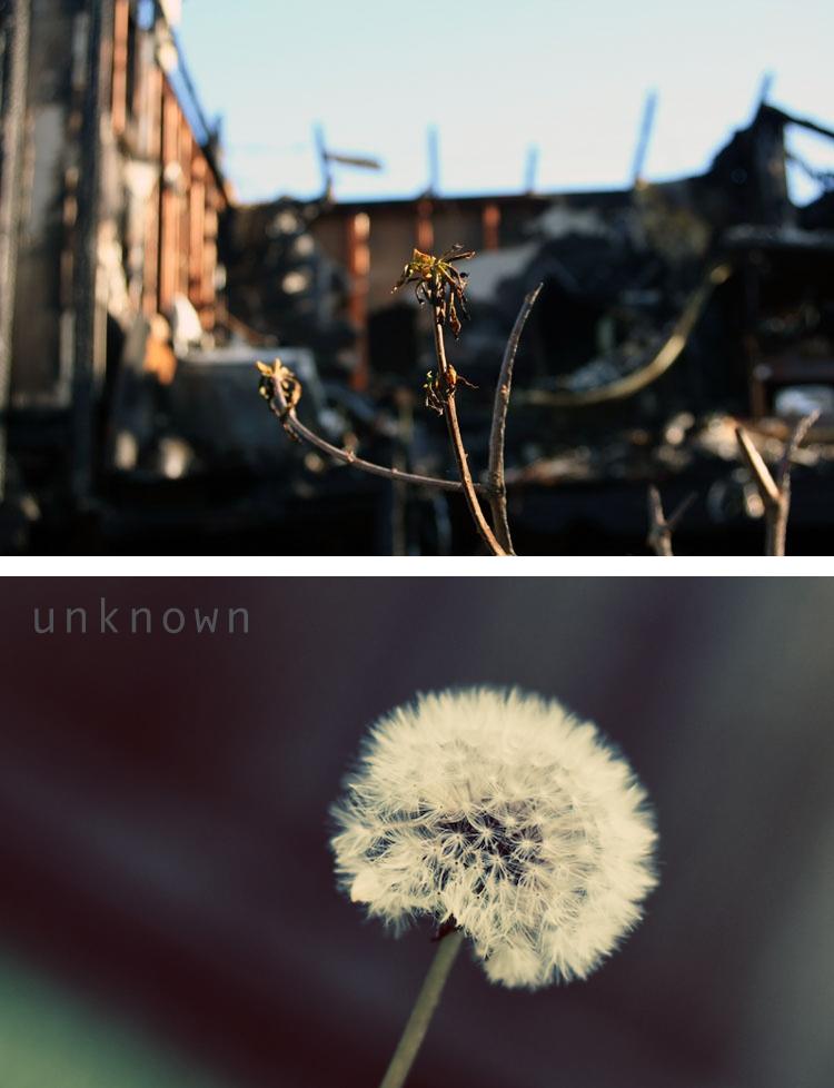 tut-unknown-final