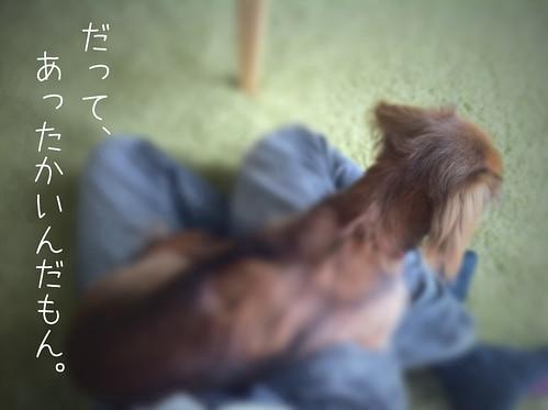 フォルテ(2010/10/31)