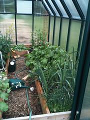 Turnips and peas