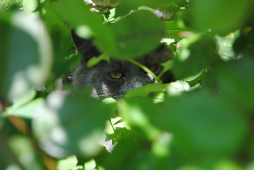 Kitty Hides
