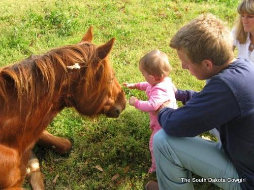 A gentle horse and cute niece