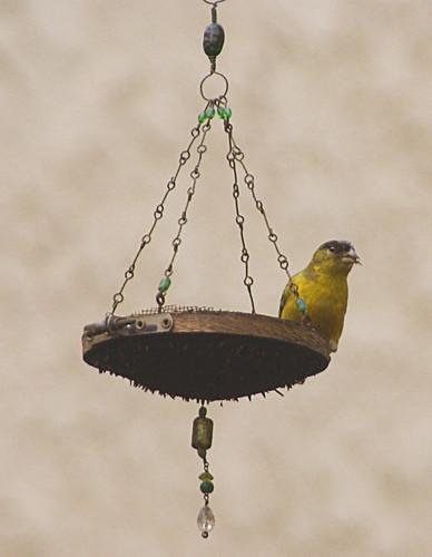 2010 Goldfinch