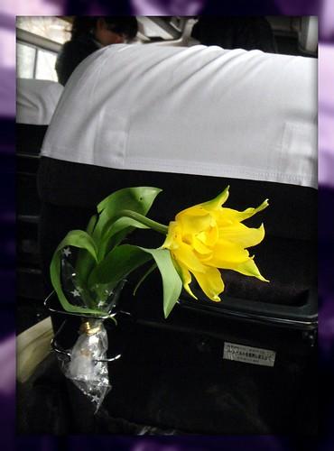 Tulip19