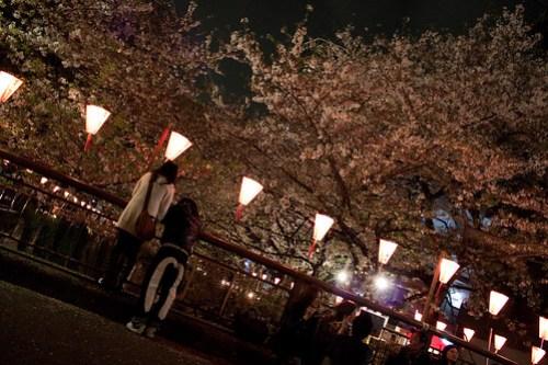 Spring Night
