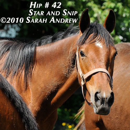 "Hip 42- ""Always in Fashion"" filly"