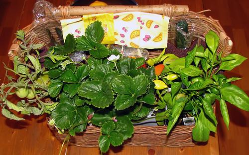 Veggie Plant Basket