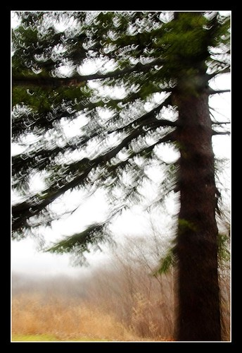 Tree in Concept Only