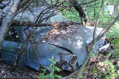 dolman car 1