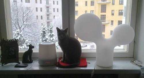 Kissa-asetelma