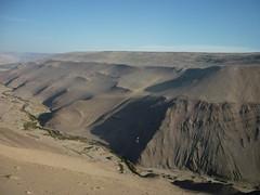 Verde en el desierto
