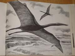 Flying Reptiles, page 35 (Cryptonaut) Tags: vintage paleontology pterosaur quetzalcoatlus paleoart