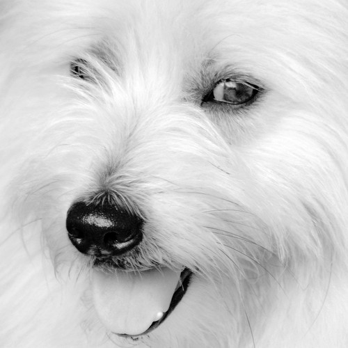 my dog 'Tubby'