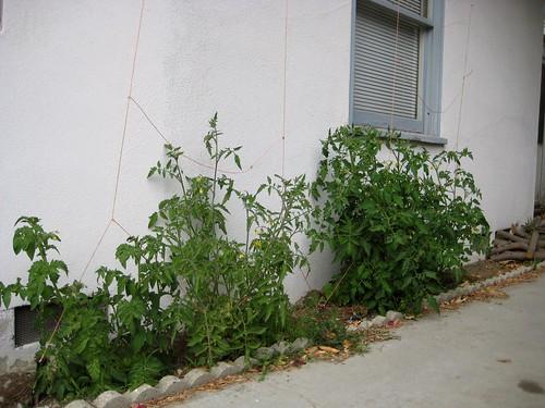 garden time, pt.4