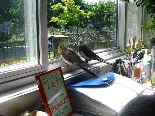 Birdies & sun in June