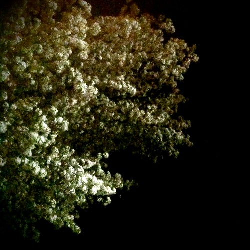 night's blooms
