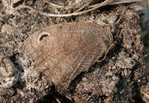 Dead butterfly in nestbox