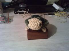Carlota, la tortuga