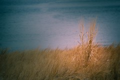 Waterfront Grass