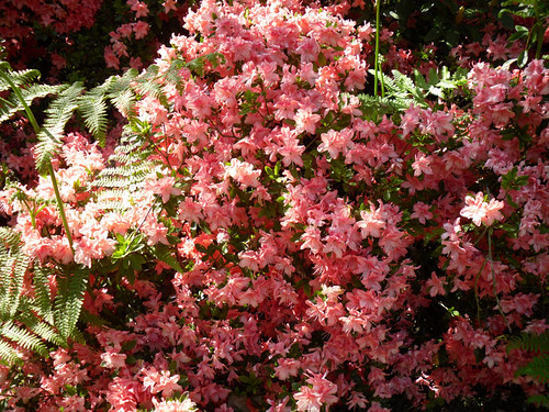 Winterbourne: Pink Flowers