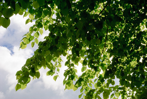 150/365 Leaves
